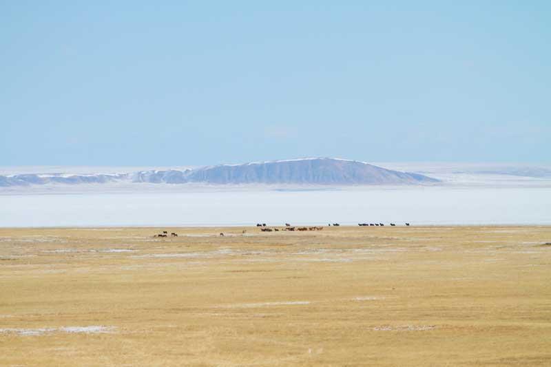 Вид с обо на Куку Хадан и лошадей на фоне озера Зун-Торей.