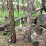 Собака-улыбака на таборе