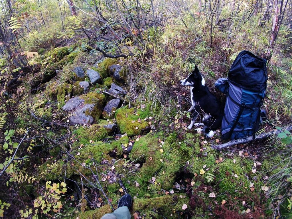 У собаки привал на берегу подземного русла Кумахты