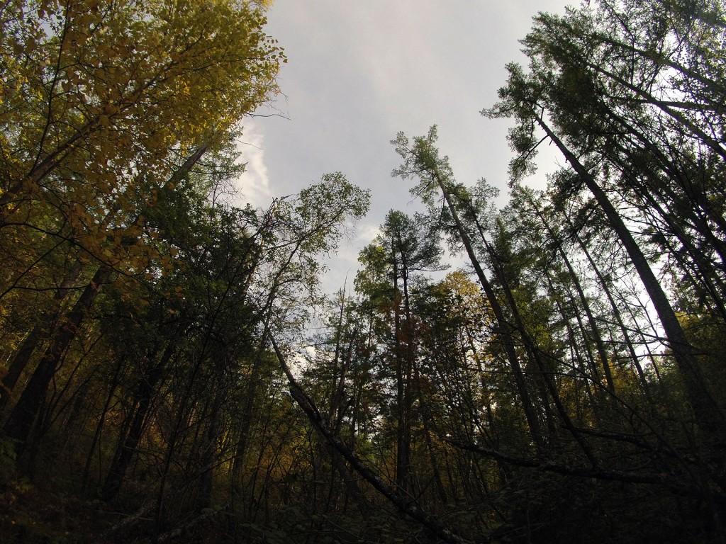Возле Кумахты появляется ощущение, что находишъся в джунглях