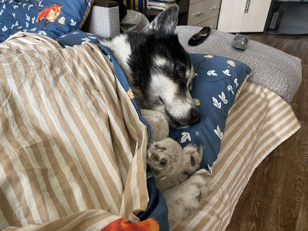 Собака после выходных